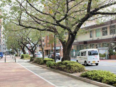 千川通りの桜は絶景!西武池袋線「桜台」駅の魅力とは!?